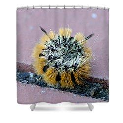 Snug As A Bug Shower Curtain