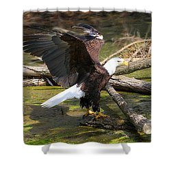 Shower Curtain featuring the photograph Soaring Eagle by Elizabeth Winter
