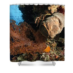 Soft Coral Seascape, Indonesia Shower Curtain by Todd Winner