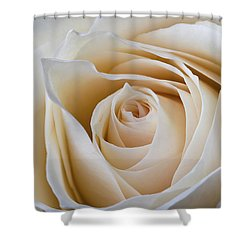 Shower Curtain featuring the photograph Soft Creamy Rose by Clare Bambers