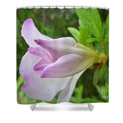 Shower Curtain featuring the photograph Soft Pink Azalea by Renee Trenholm