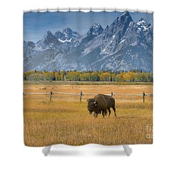 Solitary Moments Shower Curtain by Sandra Bronstein