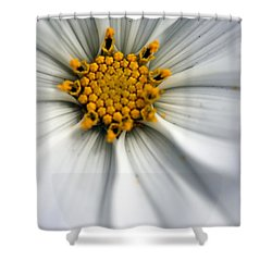 Shower Curtain featuring the photograph Sonata Cosmos White by Henrik Lehnerer