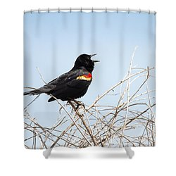 Song Of A Red-winged Blackbird Shower Curtain by Ellie Teramoto
