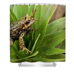 Southern Frog Pristimantis Sp, Newly Shower Curtain by Pete Oxford