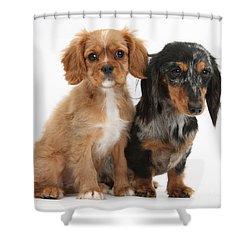 Spaniel & Dachshund Puppies Shower Curtain by Mark Taylor
