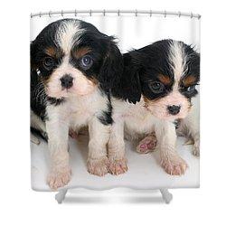 Spaniel Puppies Shower Curtain by Jane Burton