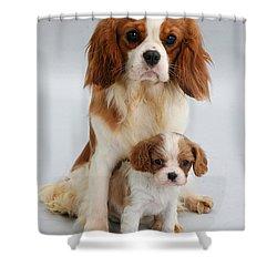 Spaniels Shower Curtain by Jane Burton