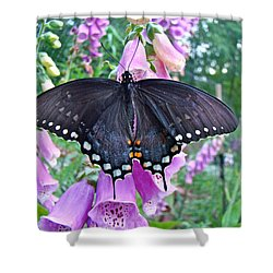 Spicebush Swallowtail Butterfly On Foxgloves - Papilio Troilus Shower Curtain by Mother Nature