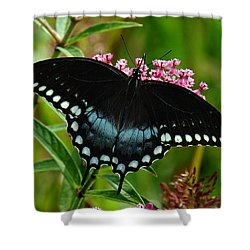 Spicebush Swallowtail Din038 Shower Curtain