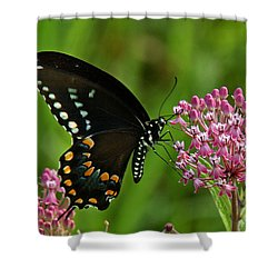 Spicebush Swallowtail Din039 Shower Curtain