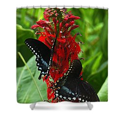 Spicebush Swallowtails Visiting Cardinal Lobelia Din041 Shower Curtain