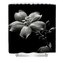 Spicy Jatropha In Black And White Shower Curtain