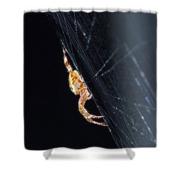 Shower Curtain featuring the photograph Spider Solitaire by Chris Anderson