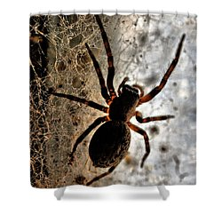 Spiders Home Shower Curtain