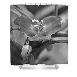 Spiderwort In Black Shower Curtain by Brooke Roby