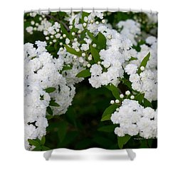Spirea Blooms Shower Curtain by Maria Urso