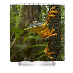 Splendid Leaf Frog  Costa Rica Shower Curtain by Piotr Naskrecki