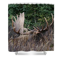 Shower Curtain featuring the photograph Splendor In The Grass by Doug Lloyd