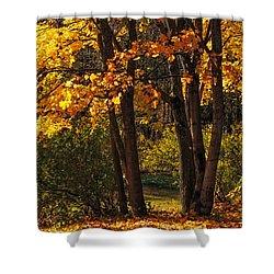 Splendor Of Autumn. Maples In Golden Dresses Shower Curtain by Jenny Rainbow