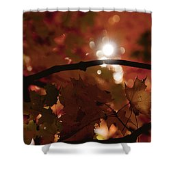 Spotlight On Fall Shower Curtain by Cheryl Baxter