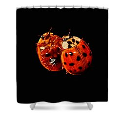 Spotted Ladybug In Reflection Shower Curtain by Tracie Kaska