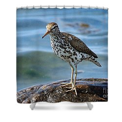 Spotted Sand Piper 6 Shower Curtain by Andrea Kollo