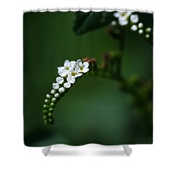 Spray Of White Flowers Shower Curtain by Sabrina L Ryan