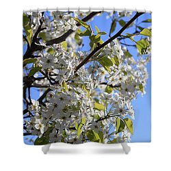Shower Curtain featuring the photograph Spring Blooms by Kay Novy