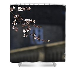 Shower Curtain featuring the photograph Spring Blossom 2 by Clare Bambers