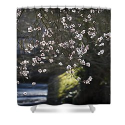 Shower Curtain featuring the photograph Spring Blossom by Clare Bambers