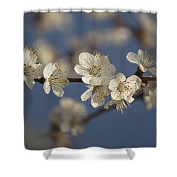 Spring Blossoms Shower Curtain by Ayhan Altun