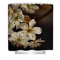 Spring Blossoms I Shower Curtain
