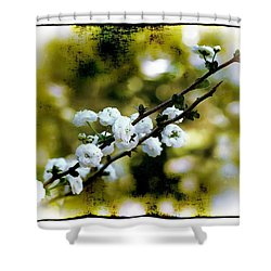 Shower Curtain featuring the photograph Spring Bough by Judi Bagwell