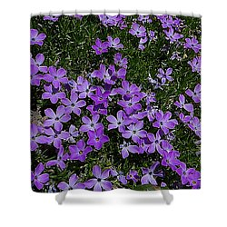Spreading Flox Wildlfower Shower Curtain
