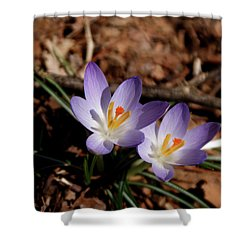 Shower Curtain featuring the photograph Spring Crocus by Paul Mashburn
