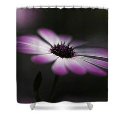 Spring Daisy Shower Curtain by Saija  Lehtonen