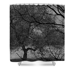 Spring For Leaves  Shower Curtain by Jerry Cordeiro
