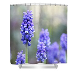 Spring Grape Hyacinth Flowers Shower Curtain by Jennie Marie Schell