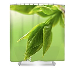 Spring Green Leaves Shower Curtain by Elena Elisseeva