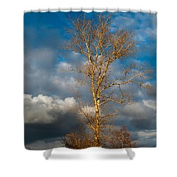 Spring Light In Autumnal Day Shower Curtain by Jenny Rainbow