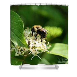 Spring Pollination Shower Curtain by Neal Eslinger