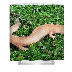 Spring Salamander Shower Curtain by Ted Kinsman