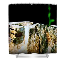 Shower Curtain featuring the photograph Spring Sunbath  by Danielle  Parent