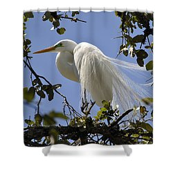Spring Time Beauty Shower Curtain