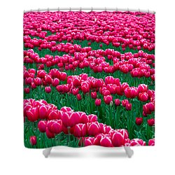 Spring Tulips Shower Curtain by David R Frazier and Photo Researchers