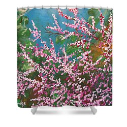 Shower Curtain featuring the painting Springs Blossoms  by Dan Whittemore