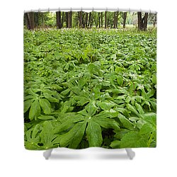 Springtime Mayapples Shower Curtain by Steve Gadomski