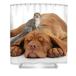 Squirrel And Puppy Shower Curtain by Mark Taylor