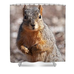 Shower Curtain featuring the photograph Squirrel by Art Whitton